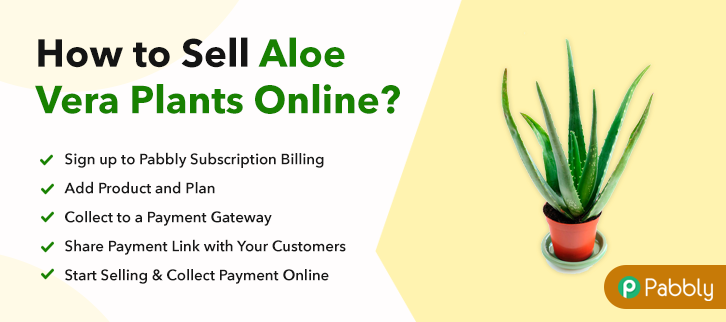 How to Sell Aloe Vera Plants Online